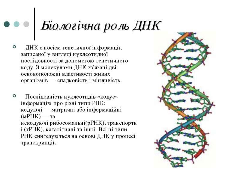 Біологічна роль ДНК ДНК є носіємгенетичної інформації, записаної у виглядін...