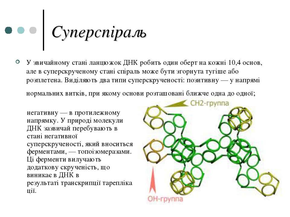 Суперспіраль У звичайному стані ланцюжок ДНК робить один оберт на кожні 10,4 ...