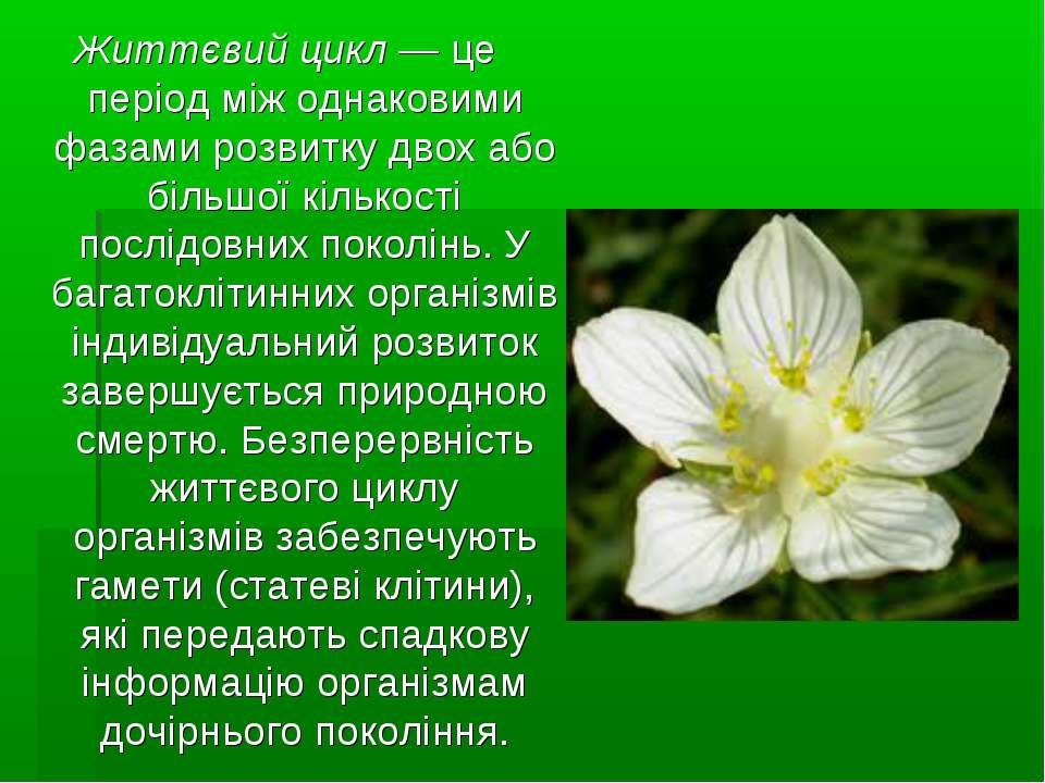 Життєвий цикл— це період між однаковими фазами розвитку двох або більшої кіл...