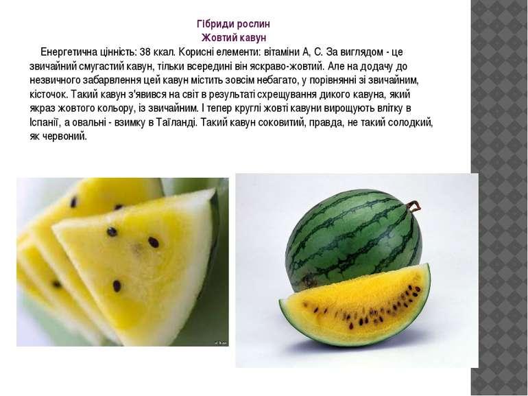 Гібриди рослин Жовтий кавун Енергетична цінність: 38 ккал. Корисні елементи: ...