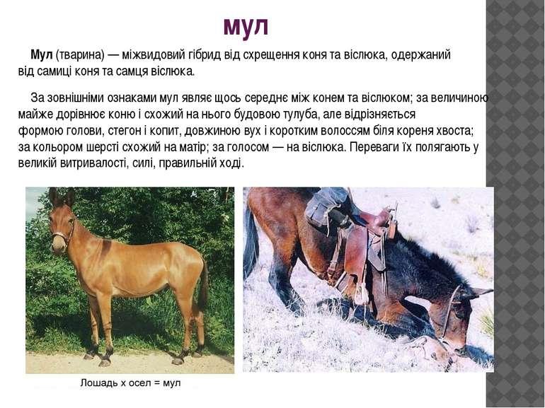мул Мул(тварина)— міжвидовийгібридвід схрещенняконятавіслюка, одержани...