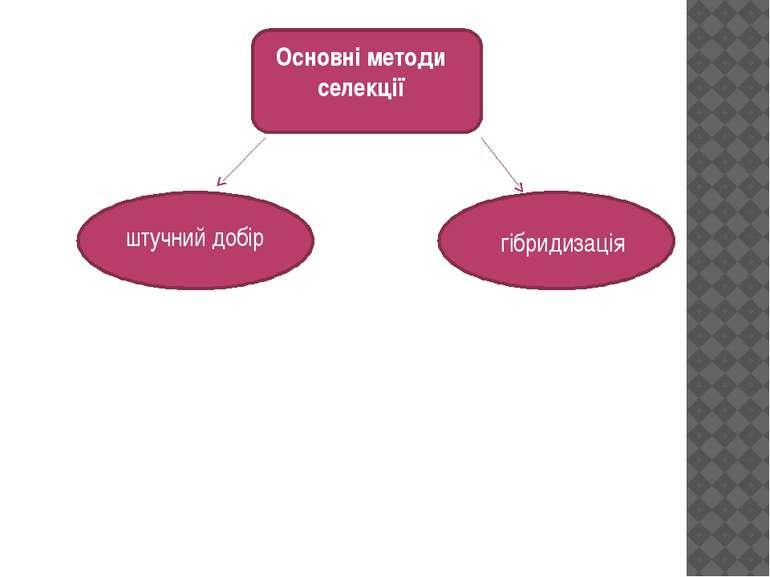 Основні методи селекції штучний добір гібридизація