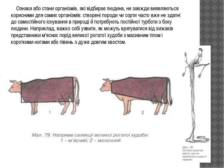 Ознаки або стани організмів, які відбирає людина, не завжди виявляються корис...