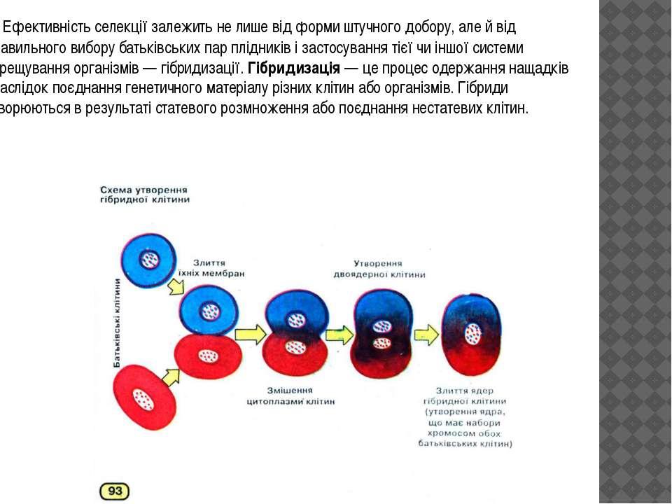 Ефективність селекції залежить не лише від форми штучного добору, але й від п...