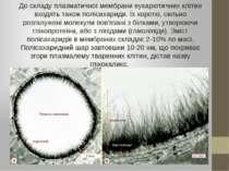 До складу плазматичної мембрани еукаріотичних клітин входять також полісахари...