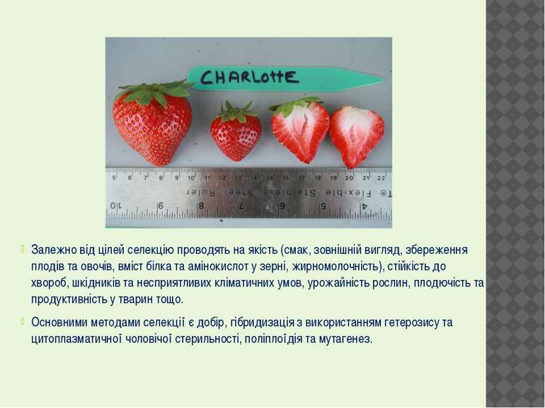 Залежно від цілей селекцію проводять на якість (смак, зовнішній вигляд, збере...