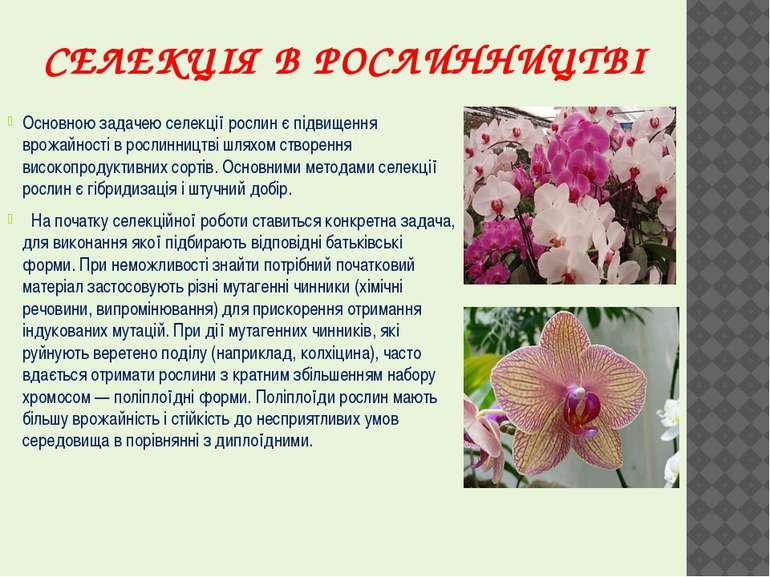 СЕЛЕКЦІЯ В РОСЛИННИЦТВІ Основною задачею селекції рослин є підвищення врожайн...
