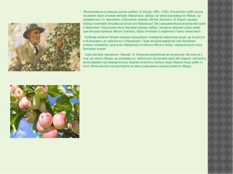 Великий внесок в селекцію рослин зробив І. В. Мічурін (1855—1935). В основі й...