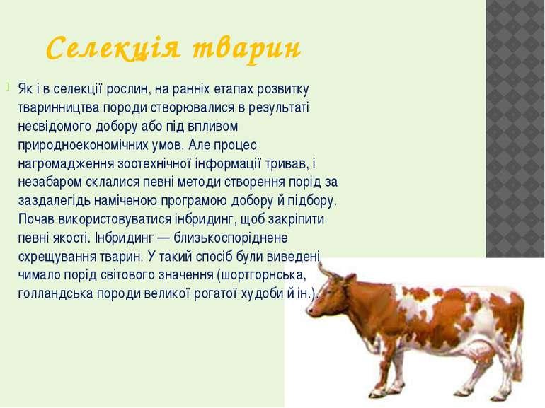 Селекція тварин Як і в селекції рослин, на ранніх етапах розвитку тваринництв...
