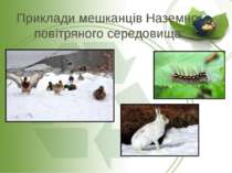 Приклади мешканців Наземно-повітряного середовища: