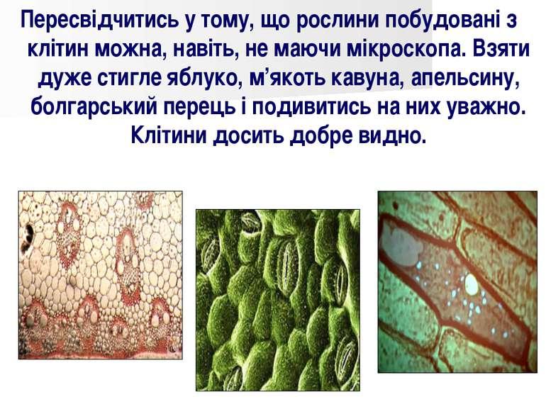 Пересвідчитись у тому, що рослини побудовані з клітин можна, навіть, не маючи...