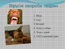 Вірусні хвороби тварин 1. Ящур 2. Сказ 3. Ентерит 4. Чума (у собак) 5. Чума у...