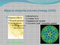 Вірусні хвороби рослин (понад 1000) Мозаїчність Плямистість Відмирання органі...