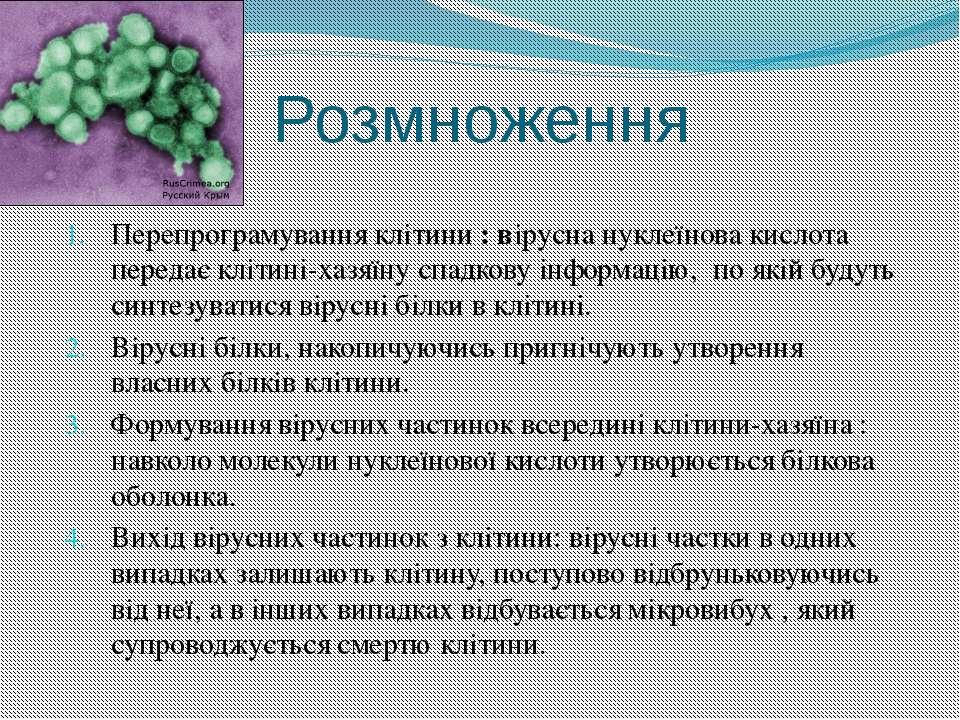 Розмноження Перепрограмування клітини : вірусна нуклеїнова кислота передає кл...
