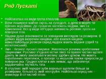 Ряд Лускаті Найбагатша на види група плазунів. Вони поширені майже скрізь на ...