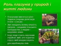 Роль плазунів у природі і житті людини Плазунами живляться різні тварини (зок...