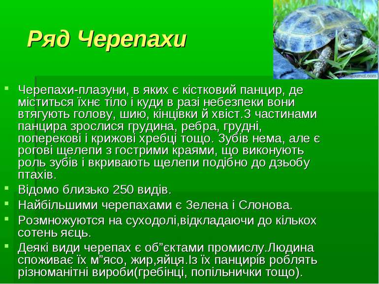 Ряд Черепахи Черепахи-плазуни, в яких є кістковий панцир, де міститься їхнє т...