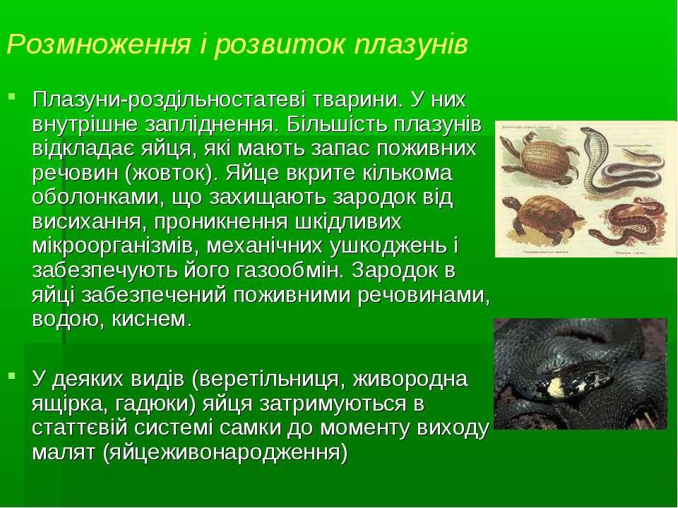 Розмноження і розвиток плазунів Плазуни-роздільностатеві тварини. У них внутр...