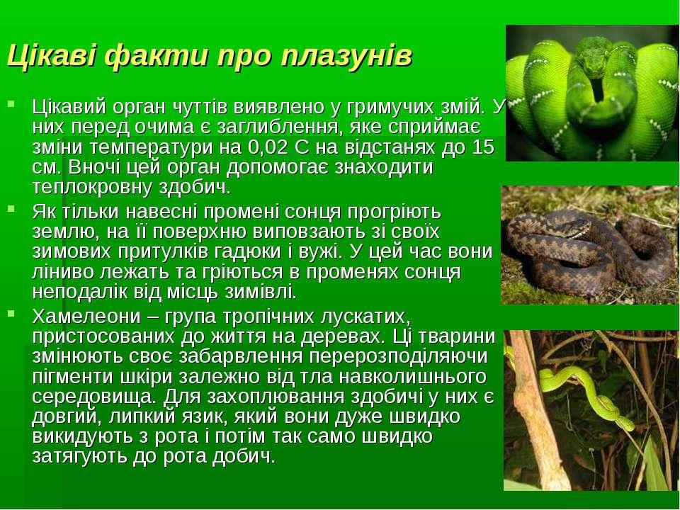 Цікаві факти про плазунів Цікавий орган чуттів виявлено у гримучих змій. У ни...