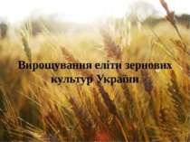 Вирощування еліти зернових культур України
