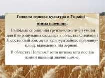 Головна зерновакультурав Україні – озима пшениця. Найбільш сприятливі грун...
