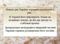 Новою для України зерновою культурою є рис. В Україні його вирощують тільки ...