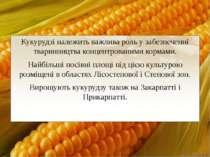 Кукурудзі належить важлива роль у забезпеченні тваринництва концентрованими к...