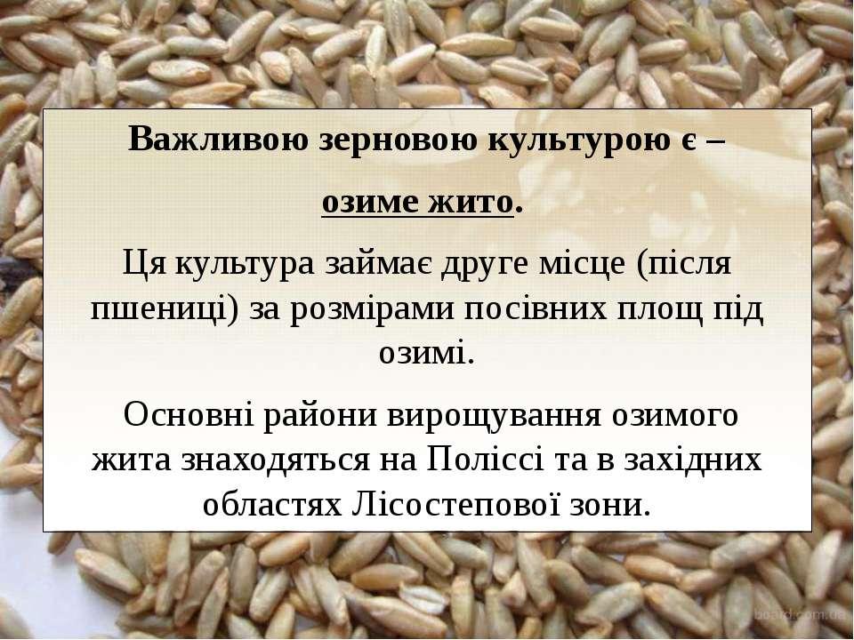 Важливою зерновоюкультуроює – озиме жито. Ця культура займає друге місце (...