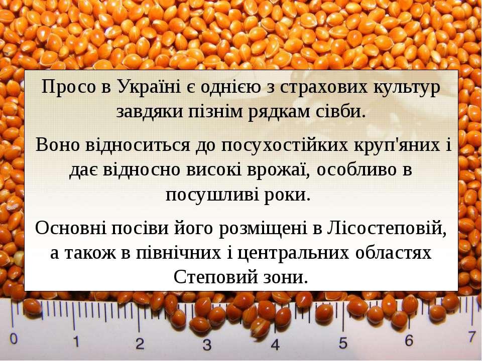 Просо в Україні є однією з страхових культур завдяки пізнім рядкам сівби. Во...