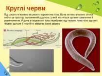Круглі черви Під шкірно-м'язовим мішком є порожнина тіла. Вона не має власних...
