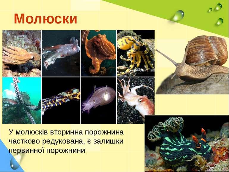 Молюски У молюсків вторинна порожнина частково редукована, є залишки первинно...