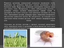 Розвиток організму зумовлений складною взаємодією генів. Можливо, що розвиток...
