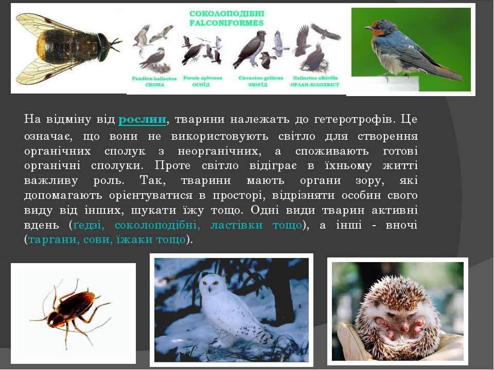 На відміну відрослин, тварини належать до гетеротрофів. Це означає, що вони ...