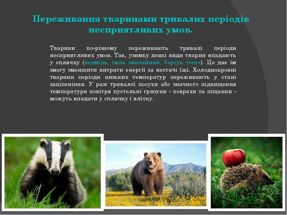 Переживання тваринами тривалих періодів несприятливих умов. Тварини по-різном...