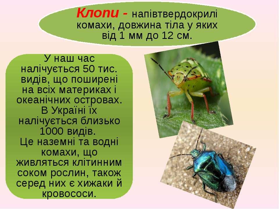 Клопи - напівтвердокрилі комахи, довжина тіла у яких від 1ммдо 12см. У наш...