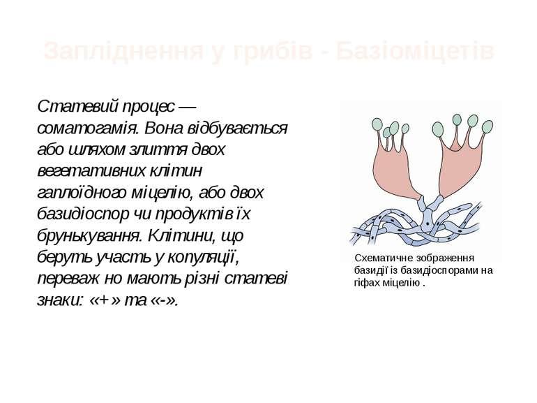 Запліднення у грибів - Базіоміцетів Статевий процес— соматогамія. Вона відбу...