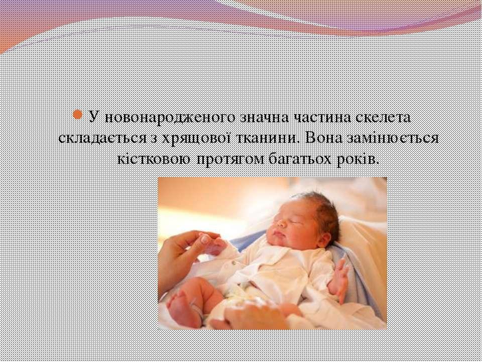 У новонародженого значна частина скелета складається з хрящової тканини. Вона...