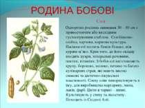 РОДИНА БОБОВІ Соя Однорічна рослина заввишки 30 – 60 см з прямостоячим або ви...