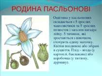 РОДИНА ПАСЛЬОНОВІ Оцвітина у пасльонових складається з 5 зрослих чашолистиків...