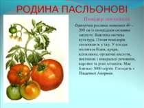РОДИНА ПАСЛЬОНОВІ Помідор звичайний Однорічна рослина заввишки 40 – 200 см із...