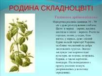 РОДИНА СКЛАДНОЦВІТІ Галінсога дрібноквіткова Однорічна рослина завишки 10 – 7...