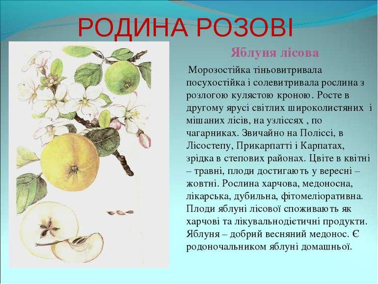РОДИНА РОЗОВІ Яблуня лісова Морозостійка тіньовитривала посухостійка і солеви...