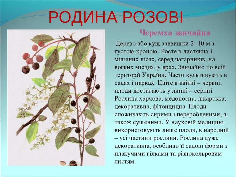 РОДИНА РОЗОВІ Черемха звичайна Дерево або кущ заввишки 2- 10 м з густою кроно...