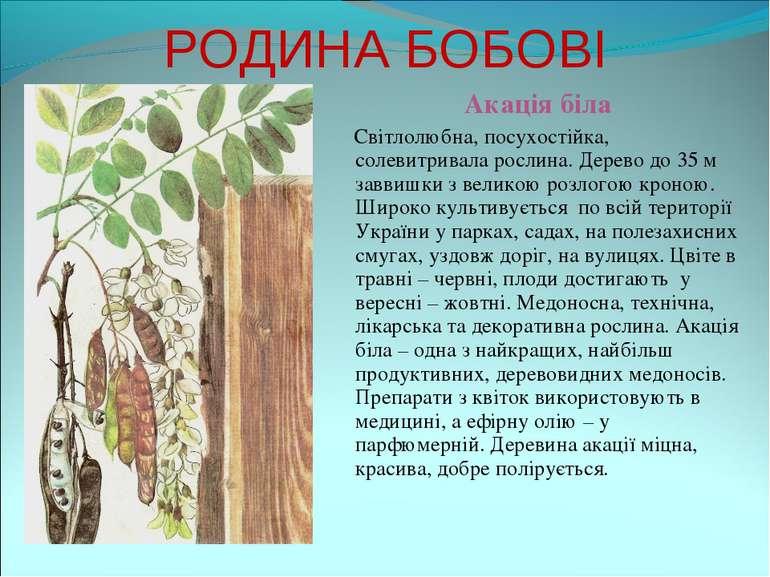РОДИНА БОБОВІ Акація біла Світлолюбна, посухостійка, солевитривала рослина. Д...