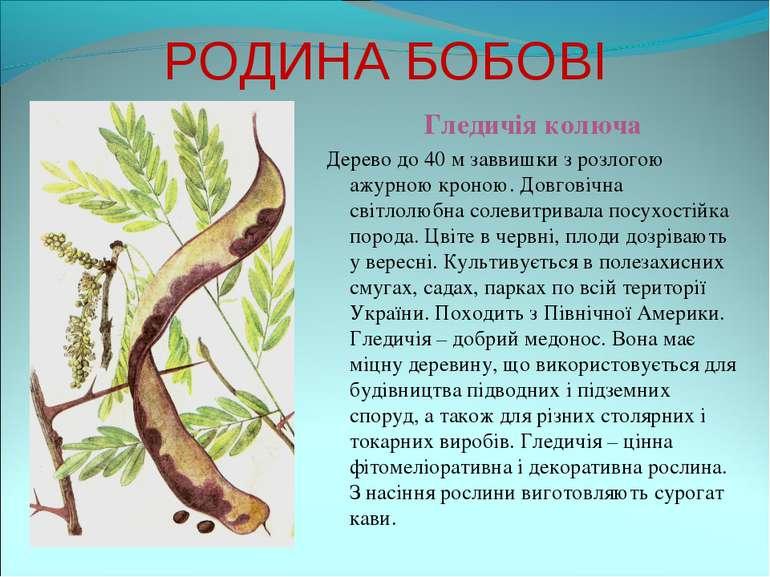 РОДИНА БОБОВІ Гледичія колюча Дерево до 40 м заввишки з розлогою ажурною крон...