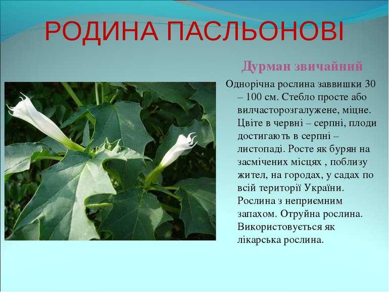 РОДИНА ПАСЛЬОНОВІ Дурман звичайний Однорічна рослина заввишки 30 – 100 см. Ст...