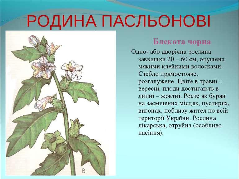 РОДИНА ПАСЛЬОНОВІ Блекота чорна Одно- або дворічна рослина заввишки 20 – 60 с...