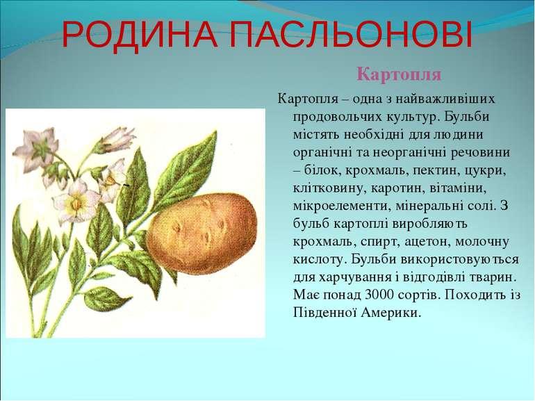 РОДИНА ПАСЛЬОНОВІ Картопля Картопля – одна з найважливіших продовольчих культ...
