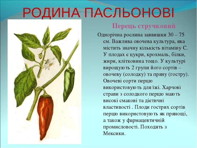 РОДИНА ПАСЛЬОНОВІ Перець стручковий Однорічна рослина заввишки 30 – 75 см. Ва...