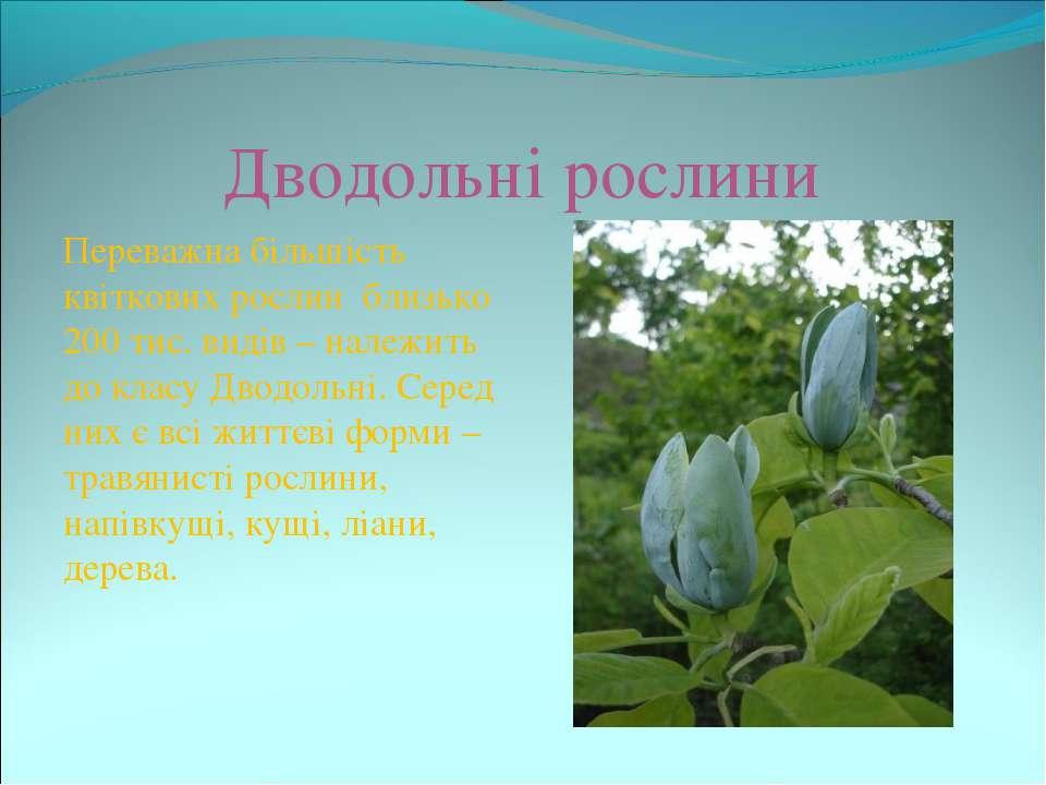 Дводольні рослини Переважна більшість квіткових рослин близько 200 тис. видів...